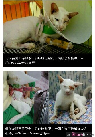 眼泪掉了下来!母猫即使被撞,仍不忘家里嗷嗷待哺的宝宝。