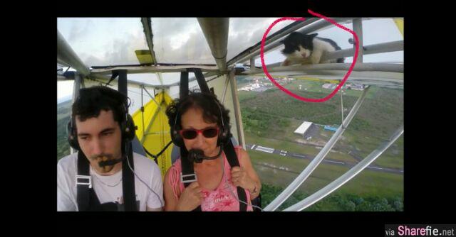 惊险万分!飞机飞到高空一半,竟然发现机翼有只猫慢慢的爬出来紧抓栏杆不放...