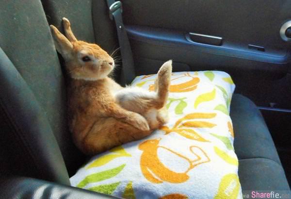 这只让你背后凉凉的超八卦兔子,可爱「偷看照」流出 网络疯狂转发