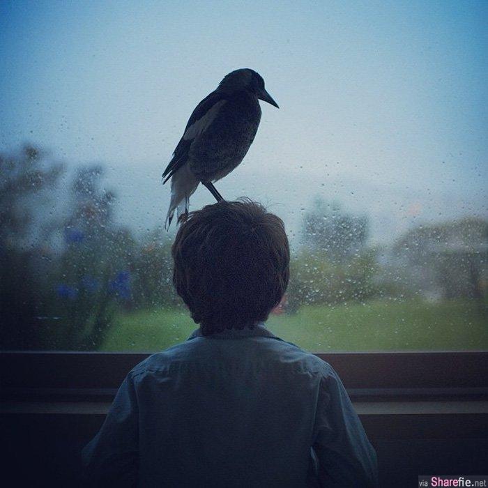 """这只喜鵲 """"Penguin""""被小男孩Noah救起来,让人意想不到的跨种族的情誼就此展开..."""