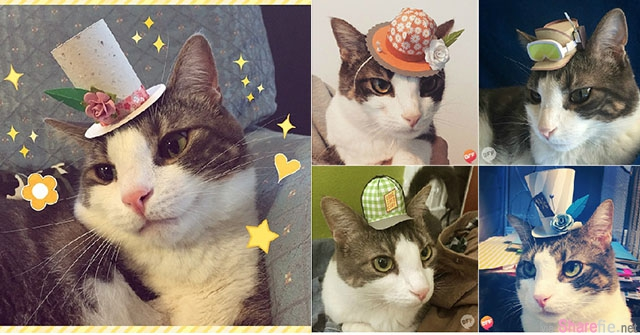 每天都要換新帽!萌度破表三腳貓變身瘋狂帽客