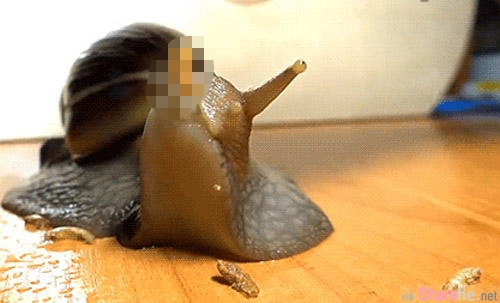 你知道蝸牛的嘴巴在哪裡?真的是長知識了∼