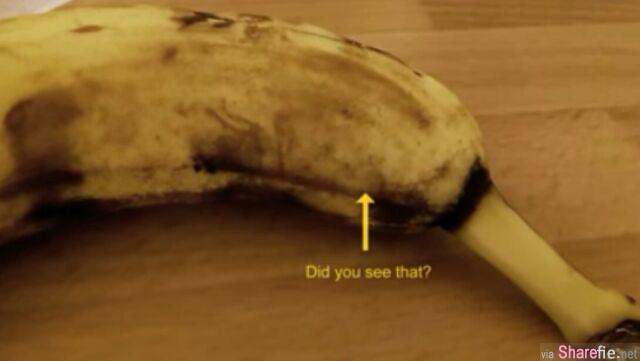当你看到这条香蕉里的生物破皮而出,你可能不敢再吃蕉了