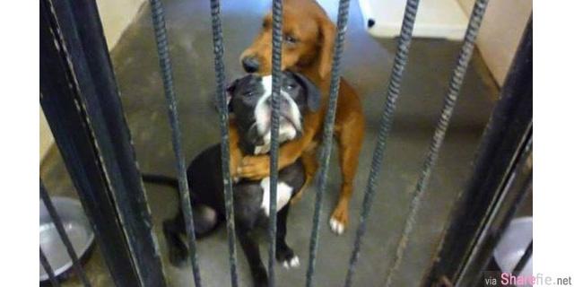 明天就要死了,两只狗狗紧紧相拥在一起,而这一抱,从此改变了牠们的命运