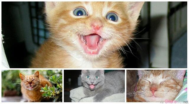 35张微笑的猫咪