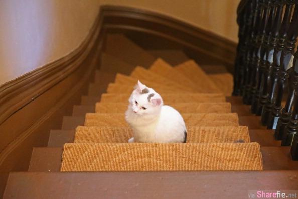 这只懒猫的爆笑下楼梯方式,让每个猫奴都跃跃欲试了!