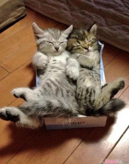 纸巾用完时,一定要把纸巾盒丢掉,不然就会发生这样的事.....