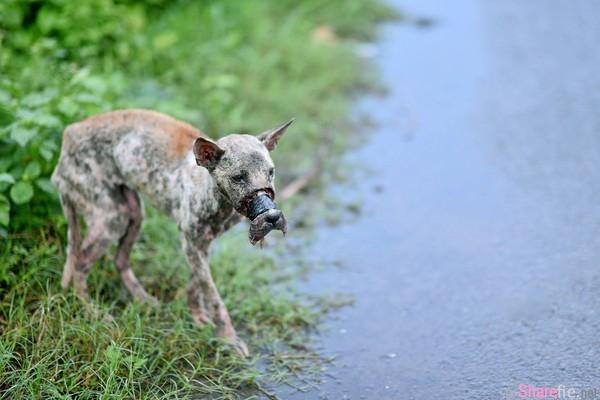 气到!狗狗嘴竟被人用黑胶带缠住无法吃喝,它们死了都不知道为什么人类这样对它们