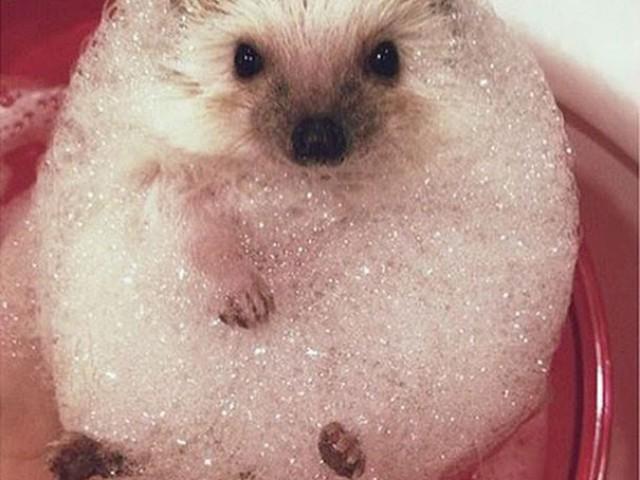 23只可爱又搞笑的动物洗澡图,它们的样子竟然是这么的陶醉!