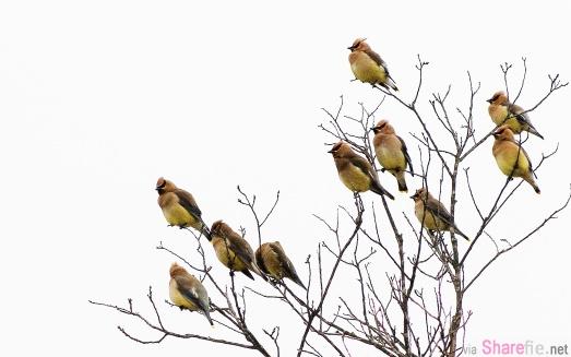 〝树上有10只鸟,打死1只,还剩几只?〞这小学生的回答太牛了!