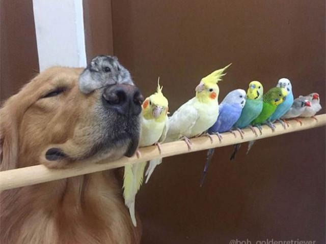1只猎犬,1只仓鼠和8只小鸟竟然可以这么和平的生活在一起,这样排排站的画面叫人怎么不融化