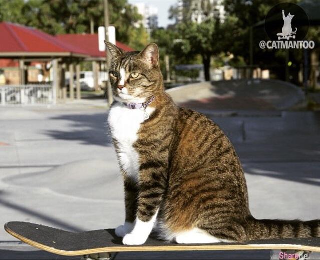 這只貓咪看起來就很普通,當你看到它的18般武藝會讓你感到驚艷
