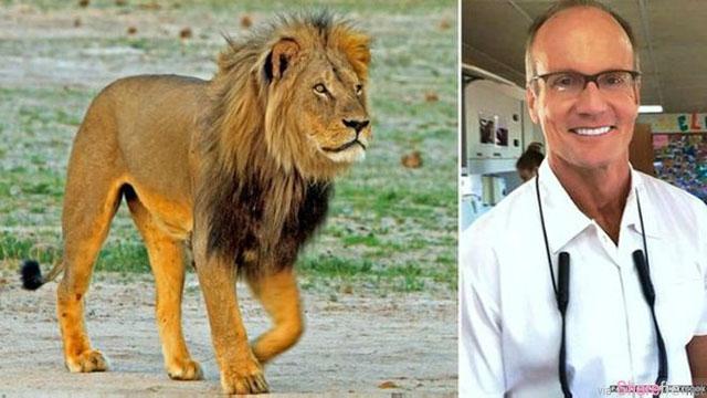 白色猎人黑色心! 美国一名牙医残忍的杀害津巴布韦明星狮子王,引发全球公愤