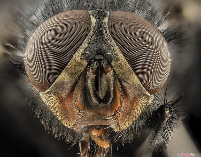 12张Wikimedia Commons 2014 年度照片 , 冠军作品就是来自这张喝着乌龟眼泪的蝴蝶