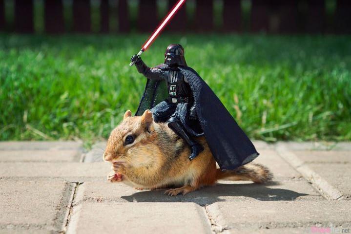 这只超可爱的花栗鼠闯入时光机来到「星际大战」!化身黑武士的坐骑