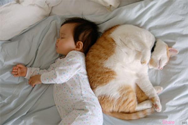 温暖有爱又有趣! 那些可爱的猫猫保姆们,看到最后两只猫咪真的是太厉害了
