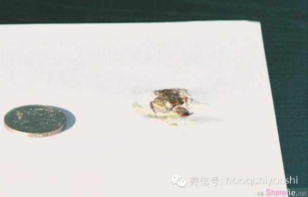 千真万确!网友实验证明踩死的蟑螂丢进垃圾桶还是会孵化几十只小蟑螂的