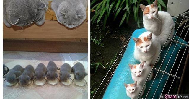 40张超级可爱的猫咪与它们的迷你版小baby,每一张都可爱的让人无法招架