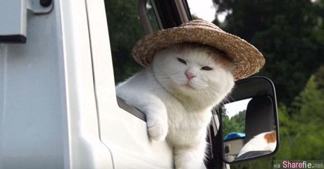 司机大猫等等我!跟着草帽猫咪司机一筒去郊游啰!