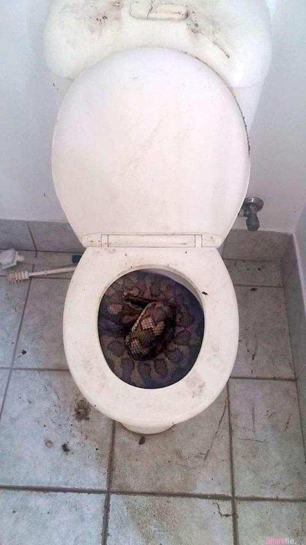 当你上厕所把马桶盖掀开发现到这样东西,你会吓得屎尿通通缩回去