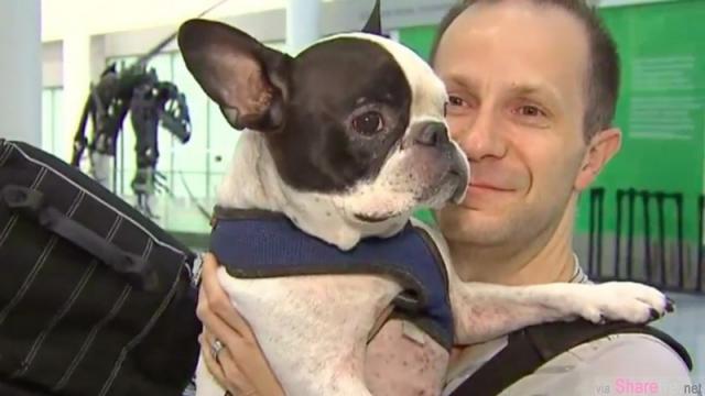 这只小狗眼看就要死在飞机上,机长最后做了让人非常感动的决定