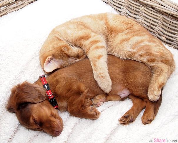 34张猫与狗相亲相爱的超可爱时刻, 它们也可以成为好朋友