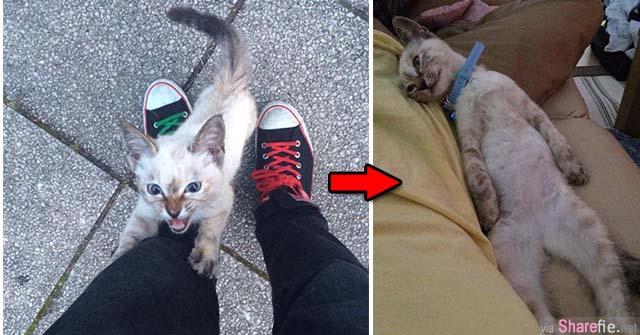 日网友路上遇到可爱猫咪「抱腿求收养」 带回家后竟然立即当自己家了