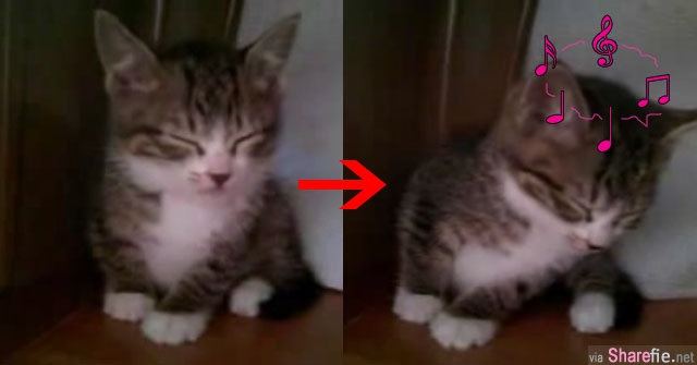 这只猫咪超想要睡觉被主人发现偷拍,结果猫咪打瞌睡的画面被玩坏了