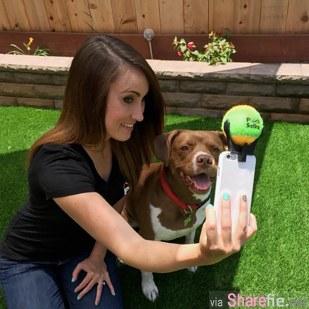 只要用这个就可以让狗狗安静的一起玩自拍,已经有人在筹资开发了