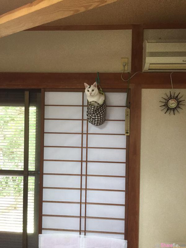 这只猫咪的弹跳力好惊人!你到底是怎么进来的啦!