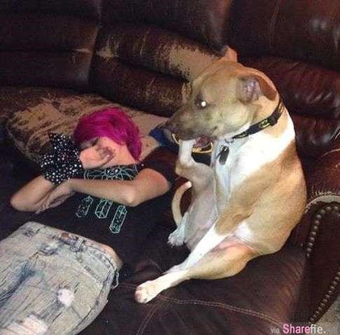 超酷的 这只狗狗一坐下来就像小孩般吸允手指   网友:真正的原因可能是....