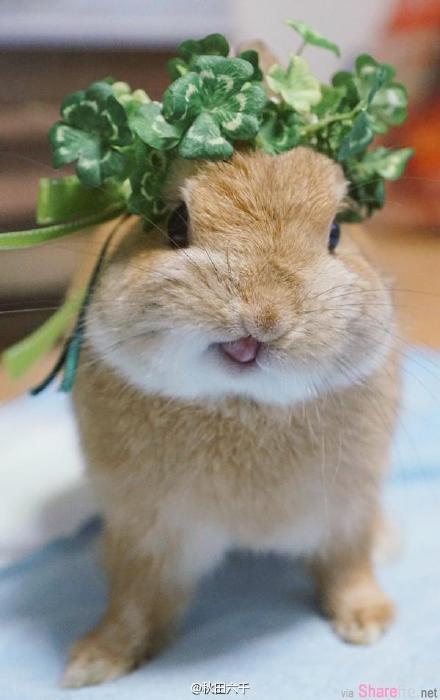 小兔子吐舌头的模样你见过吗?最后一张的表情太疗愈了