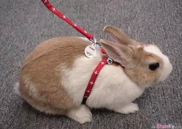 有对恩爱兔子情侣相处了一年后,主人好奇嘿咻后仍然没有动静,偷拍后发现惊人秘密