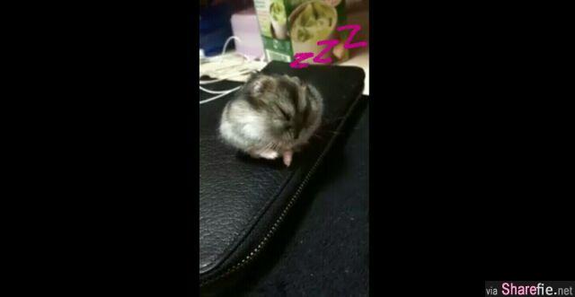 这只可爱的小鼠鼠下一秒的动作会让你笑到一直重播