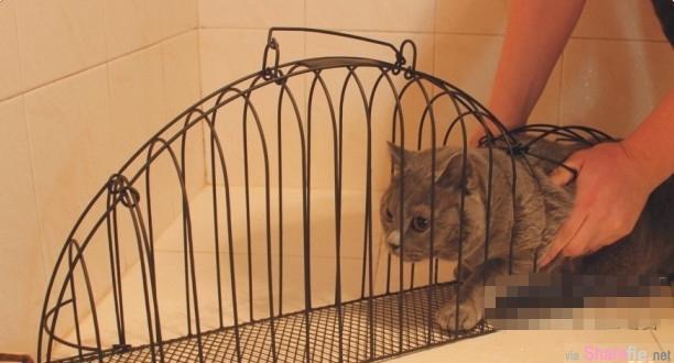 世上竟有这么奇葩的发明  猫猫用完都惊恐了