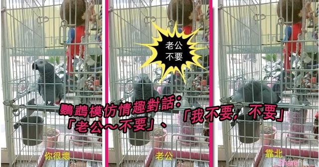 这只鹦鹉竟然学会主人闺房情趣对话  直喊:老公不要!