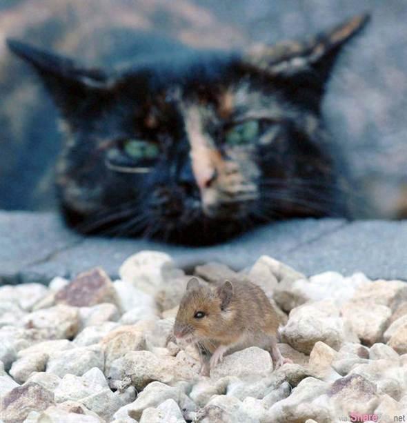 这只花猫一口咬住了田鼠,命在旦夕的小鼠拼命求饶 想不到结局会这样