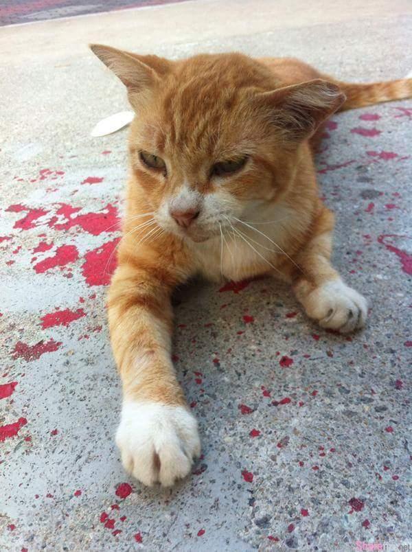 所有人都对躺在血泊中的猫咪视若无睹,终于有位路人忍不住上前,结果让他哭了
