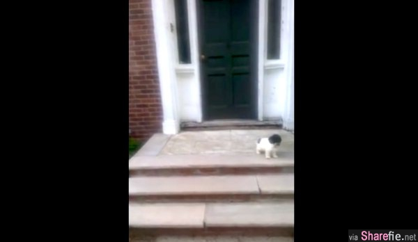 主人想训练狗狗下楼梯,没想到牠居然自作聪明,冲了出去~结果是...