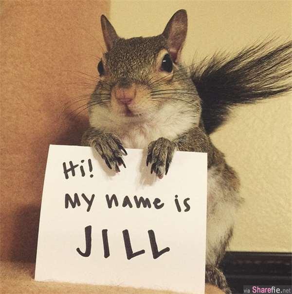 超可爱小松鼠 jill!被好心人解救后 如今完全成为网络明星了!