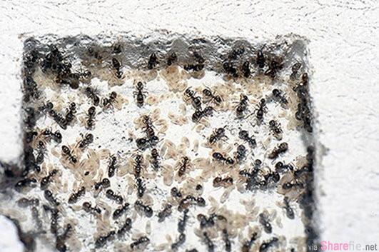 这名网友抓到一只『蚁后』竟然想养 没想到一养就不可收拾! 帝国诞生了