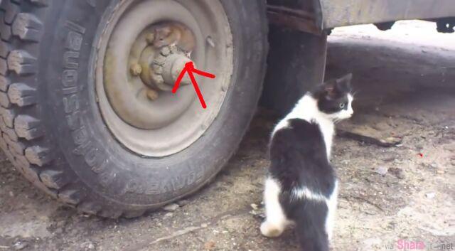 这只猫咪闻到老鼠的气味却老是找不到,1分钟后终于发现老鼠躲在...
