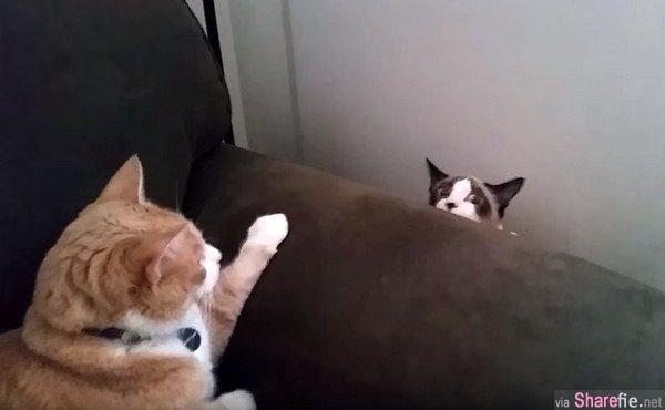 沙发旁出现猫咪升降机!被兇后竟然还懂得缓缓下降