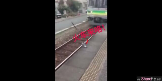 """这只超可爱的短腿""""哥""""正在赶火车 竟然还插队"""