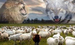 一群羊要跟某种动物生活在一起,有两个选择:选狼还是选狮子?大多数的人都选错!