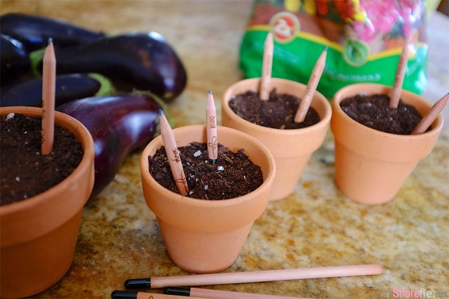 他把用到只剩笔头的铅笔倒插在花盆中,浇水日晒一周后,盆栽竟然发生惊人的奇蹟...太神奇了!