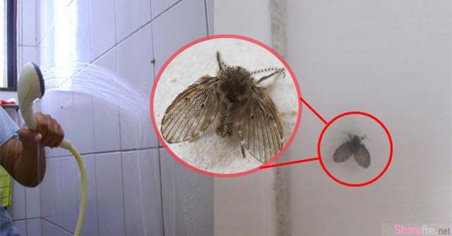 厕所里常见的『小飞虫』,原来是从这些地方出来的!「牠」竟然会传染病毒!教你 4招彻底消灭