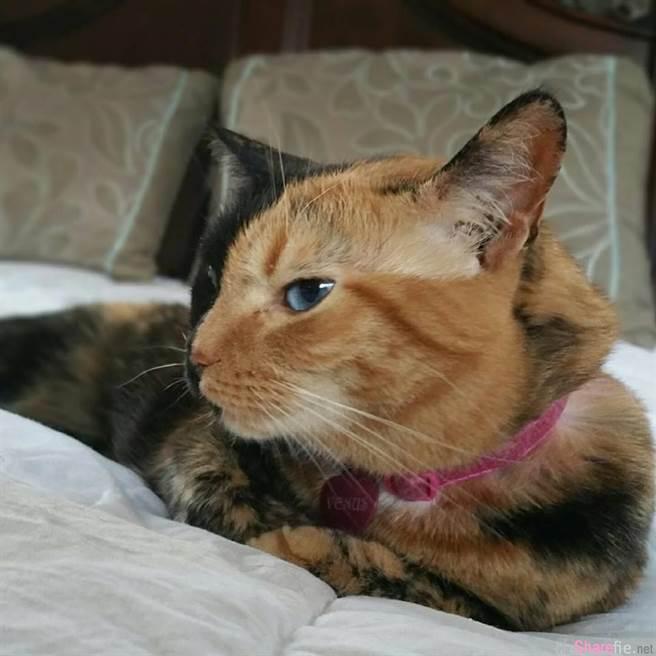 这只看似平凡的虎斑猫,当它把头一转,脸部竟然出现...