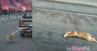世上竟然有这种人!将狗绑在车尾拖行 目击者:狗狗的脚掌血肉模煳...