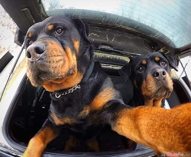 就是爱自拍 这张与狗狗们自拍的喵星人身份曝光